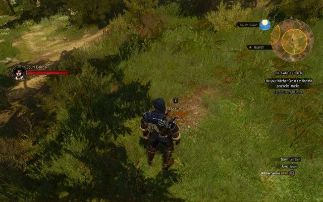 Use your Witcher Senses to find the peacocks' tracks.